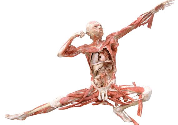A kiállításon különböző betegségeket is bemutatnak, egészséges és beteg szervek segítségével.