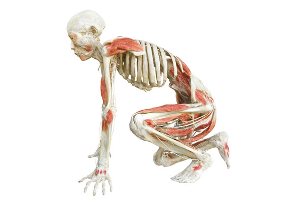 A kiállítás időtartama alatt háromhetente különböző betegségek kerülnek fókuszba, ilyenkor az adott területen kompetens orvos vezetésével is végignézheted a tárlatot.