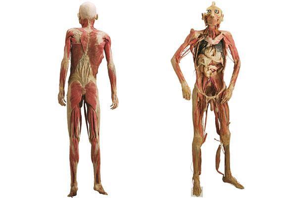 A kiállításon megismerheted a szervek működését és a test bonyolult összefüggéseit is.