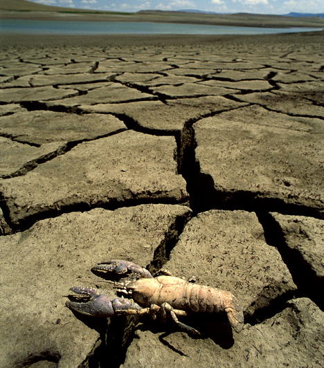 SzárazságA vízkészletek apadása miatt egy friss kutatás szerint 90% a valószínűsége annak, hogy a következő száz éven belül hárommilliárd ember kényszerül elhagyni otthonát, hogy előnyösebb éghajlati körülmények közé költözzön.