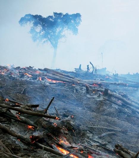 Erdőirtás  A fakitermelés, a mezőgazdasági területek növelése és a városi területek terjedése miatt egyre nagyobb erdőterületeket irtanak ki anélkül, hogy a fákat újratelepítenék. Amellett, hogy ezzel az adott hely teljes élővilágát elpusztítják, a felszabaduló széndioxidnak nem kevés köze van a globális felmelegedéshez.