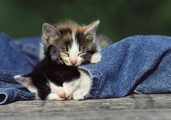 - Te csak ne aggódj, majd én őrködöm, míg alszol. A nagy felbontású képért kattints ide! »