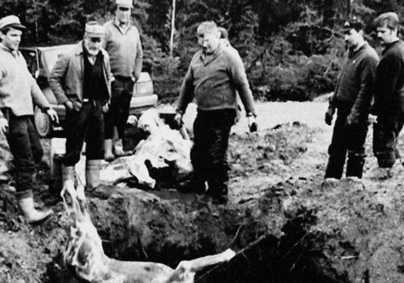 A vadászoknak is akadt dolguk: a még élő háziállatokat és környező erdők lakóit is ki kellett lőniük, hogy azok a bundájukkal ne terjesszék tovább a sugárzást. Az elpusztult vagy megölt állatok tetemeit gödrökbe dobták, amelyeket később betemettek.