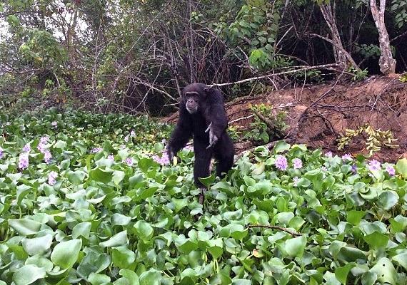 A hím állat 2013-ban elveszítette a párját és a kicsinyeit is, azóta egyedül él az erdőben.