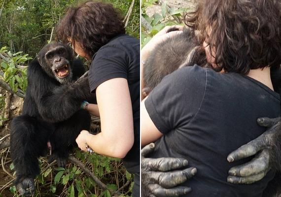Ponsónak a múlt héten nagy örömet szerzett Estelle Raballand, a Chimpanzee Conservation Center igazgatója, amikor meglátogatta őt: a csimpánz azonnal a nő nyakába ugrott, és hosszú ölelésben részesítette.