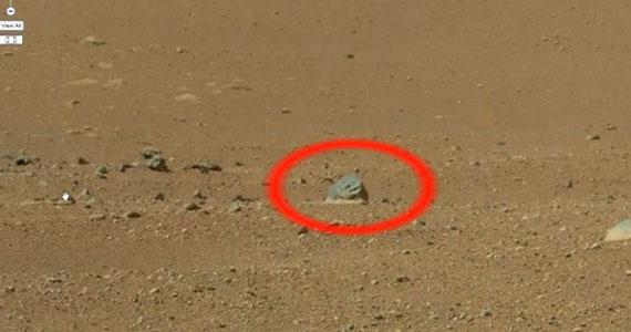 Egy marsi állat vagy egy különös kő?