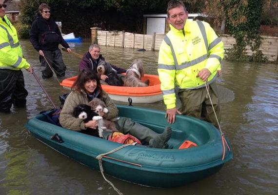 Segítők csónakkal mentenek kutyákat az árvíz elől.
