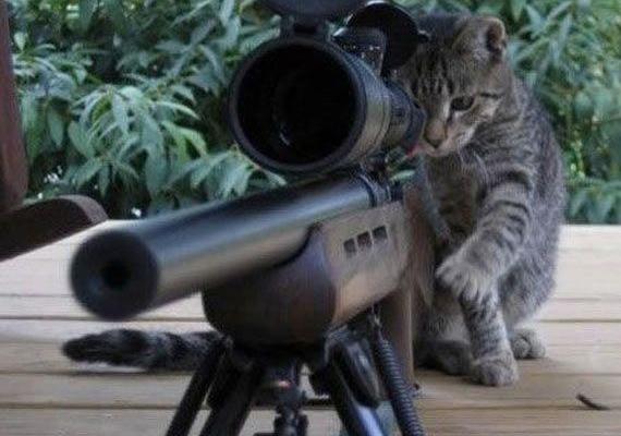 Terrorista macska? Nem véletlen, hogy a cuki kiscica egy komoly fegyver mögé bújt, és ezt a képet twittelték.