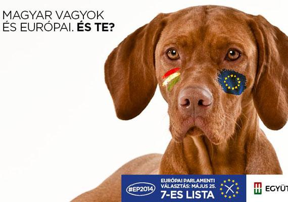 A rövid szőrű vizsla is magyar, és persze ő is európai.