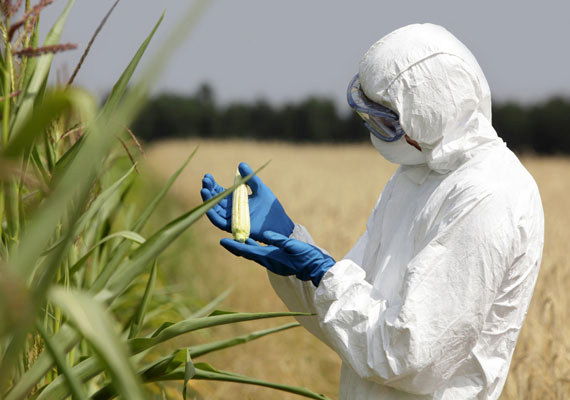 Az ellenzők talán legnagyobb félelme az, hogy az USA-ban szabad, ám az EU-ban általában tiltott génmódosított élelmiszereket kénytelenek lesznek beengedni az európai országok. Pedig nemrég kaptak jogot arra a tagállamok, hogy állami szinten is tilthassák a génmódosított termékek termesztését. Az ellenzők félelme szerint az amerikai GMO cégek perelhetnének azért, hogy mégis betörhessenek az európai piacokra.