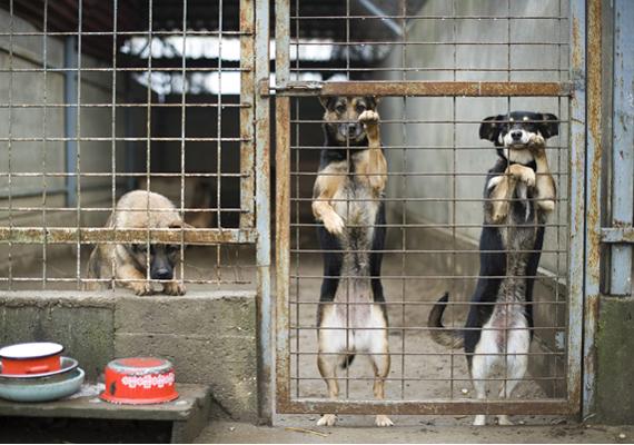 Az egyre rosszabb helyzetben lévő és egyre zsúfoltabb állatmenhelyeken is lenne helye az összegnek.