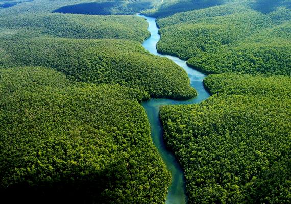 Az Amazonas gazdag, burjánzó fák között csordogál.