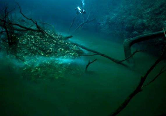 Még növényzet is található a vízben: a folyó környékén több fa is kinőtt.