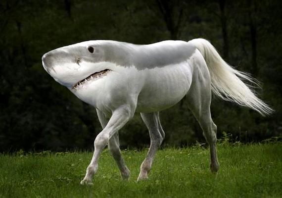 Azért egy kicsit örülünk, hogy a cápa a valóságban nem mászkál négy lábon a szárazföldön.