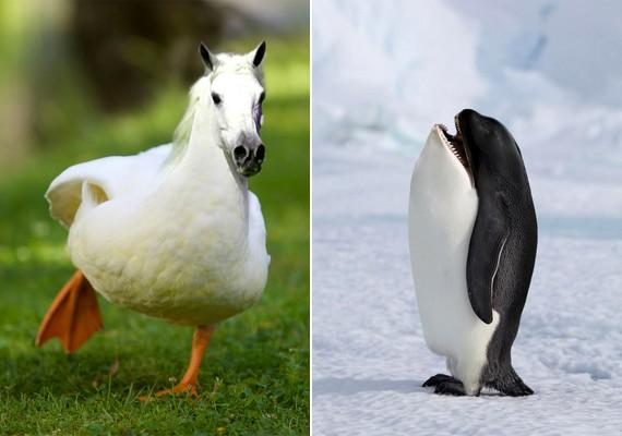 A nagyra nőtt kacsa után íme, egy kisnövésű ló, valamint egy éles fogú pingvin.