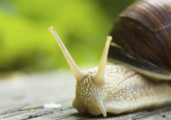Az egyenlő házassági jogok támogatása jegyében neveztek el egy újonnan azonosított szárazföldi hímnős csigafajt Tajvanon. A biológusok az Aegista diversifamilia nevet adták a csigának, az állatvilágban megfigyelhető sokféle szexuális orientációra utalva.