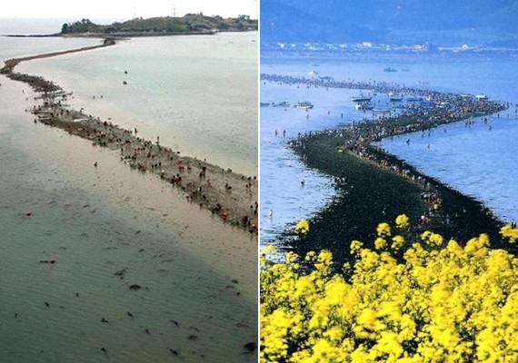 A két koreai sziget, Jindo és Mondo között minden évben kettényílik a tenger, mintha csak a bibliai Mózes története elevenedne meg. Zarándokok ezrei özönlenek ilyenkor a területre.