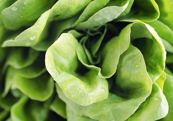 A fejes saláta magas káliumtartalma miatt remek vérképző és vérkeringés-serkentő, így a hajhagymákat és ezáltal a hajszálakat is életelibbé varázsolja.