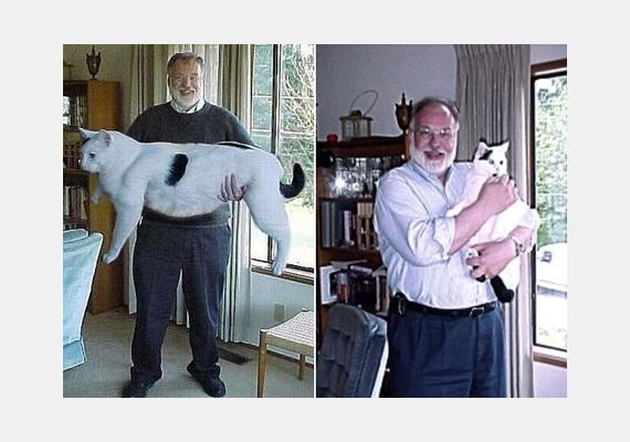 Az óriás cica, Hógolyó az ezredforduló környékén borzolta a netezők idegeit hatalmas méreteivel. A gazdája egy évvel később elismerte, a fotó csak egy általa alkotott vicc volt.
