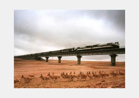 Liu Weiqiang díjnyertes természetfotójáról is kiderült, hogy nem igazi: a felvétel két különböző képből áll össze - eredetileg az egyiken a vonat, a másikon az antilopcsorda szerepel.