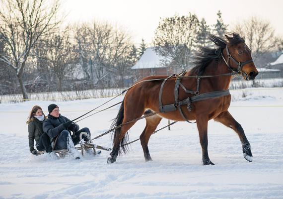 Úgy tűnik, ló vontatta szánnal a legegyszerűbb közlekedni Debrecen környékén.