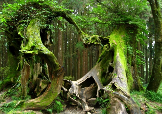 Az élővilágot, növényzetet illetően is találtak furcsaságokat, szokatlan sérüléseket, növekedési rendellenességeket.