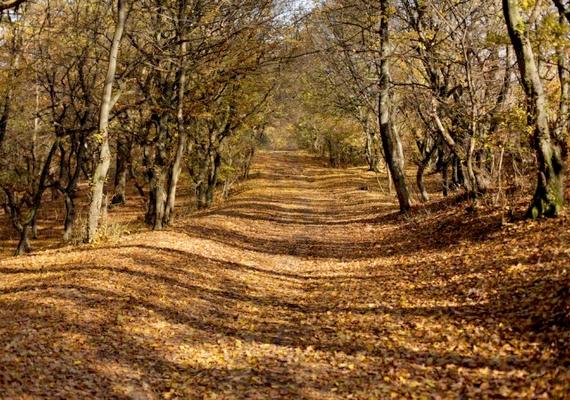 Egyes elméletek szerint az erdőben valami olyasmi van, ami kihat az emberi elmére is, befolyásolja az érzékelést és a tudatállapotot, ráadásul külsérelmi nyomok is jelentkezhetnek azokon, akik ellátogatnak a helyre.