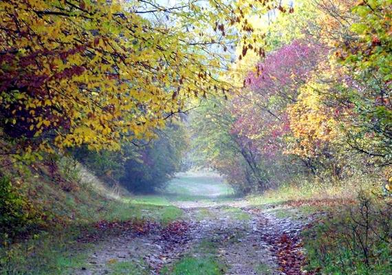 Az erdő egyes részei egyébként nagyon szépek, de hátborzongató mivolta miatt nem a turisták kedvence.