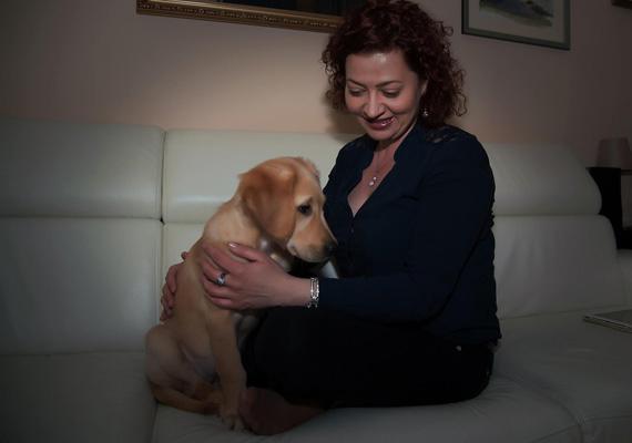 A női politikusok közül a DK-s dr. Vadai Ágnes életrajza magasan kitűnik a többi közül. Az ellenzéki politikusnő a magyaron kívül hat nyelven beszél, angolul és spanyolul felsőfokon. Ezen kívül elvégezte a Közgáz közgazdaságtan és az ELTE jogász szakjait.