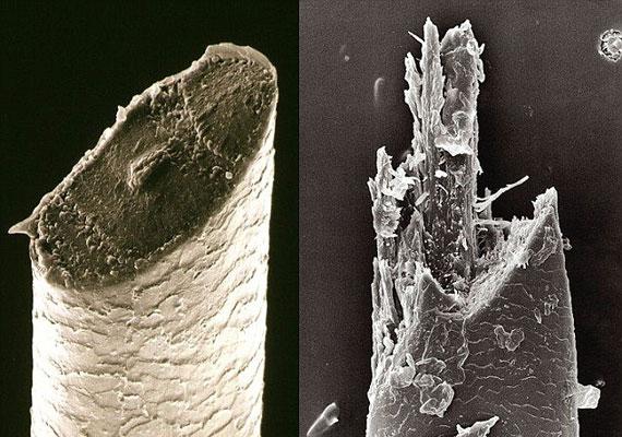 És íme, a megoldás, miért simább a bőr a hagyományos borotvától, mint az elektromostól: két frissen elvágott szőrszál mikroszkopikus felvétele.