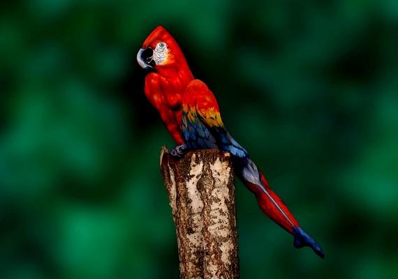 A papagájról készült kép a művész egyik leghíresebb alkotása.
