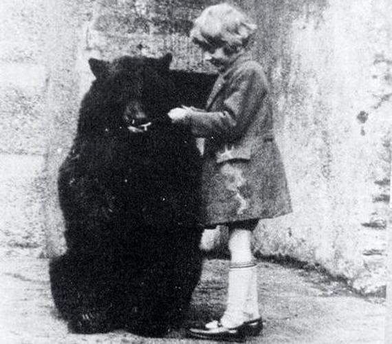 Winnipeg, a szelíd nőstény medve volt Winnie the Pooh, vagyis Micimackó ihletője. A képen Milne kisfiával látható.