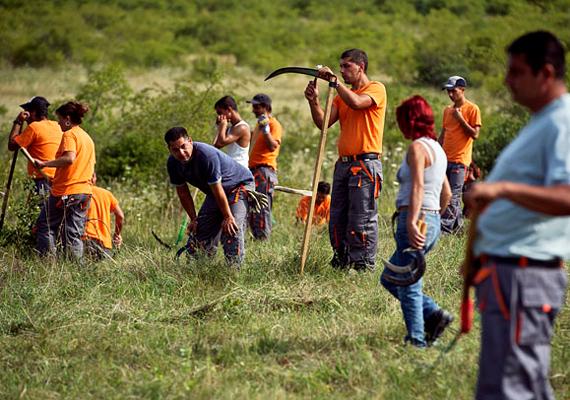 Elsődleges feladatuk az, hogy egy 17 hektáros területen erdőtelepítést végezzenek.