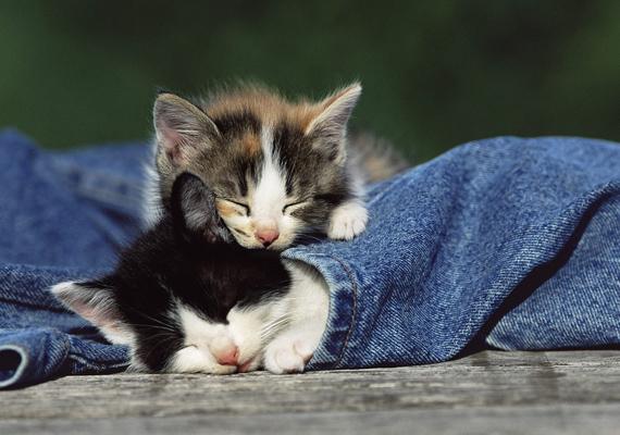 - Hé, adj nekem is a takaróból! Kattints ide a nagy felbontású képért! »