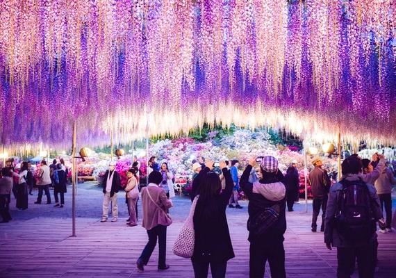 A világ minden tájáról turisták járnak a ritka szépség csodájára.