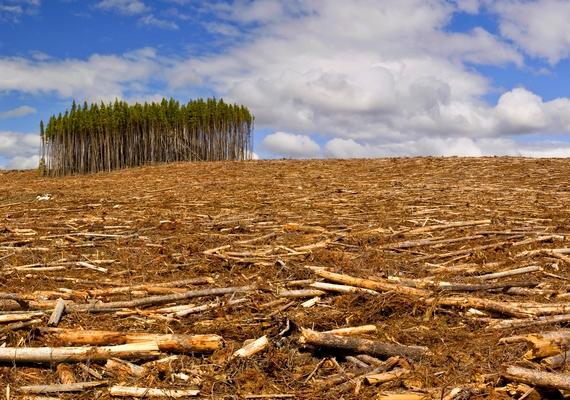 Az ENSZ Élelmezésügyi és Mezőgazdasági Szervezetének 2015-ös kiadványából kiderült, hogy világszerte a felére csökkent az erdőirtás az elmúlt 25 évben. A világ erdőségeinek aránya jelenleg a következő: 93% természetes erdő és 7% telepített erdő - utóbbi kiterjedése több mint 110 millió hektárral nőtt az elmúlt negyed évszázadban.
