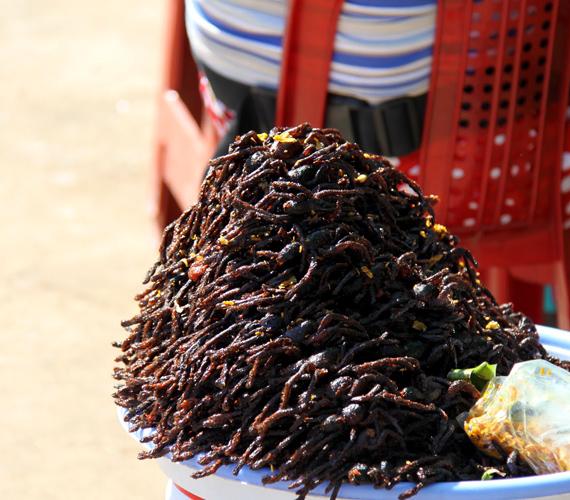 Kambodzsában népszerű ínyencségnek számít a szárított pók. Általában tarantulákból készítik a helyi csemegét.
