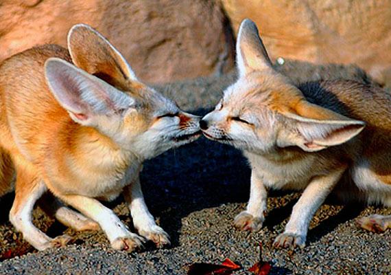 Az első csók mindig egy kicsit bizonytalan, de a legédesebb.
