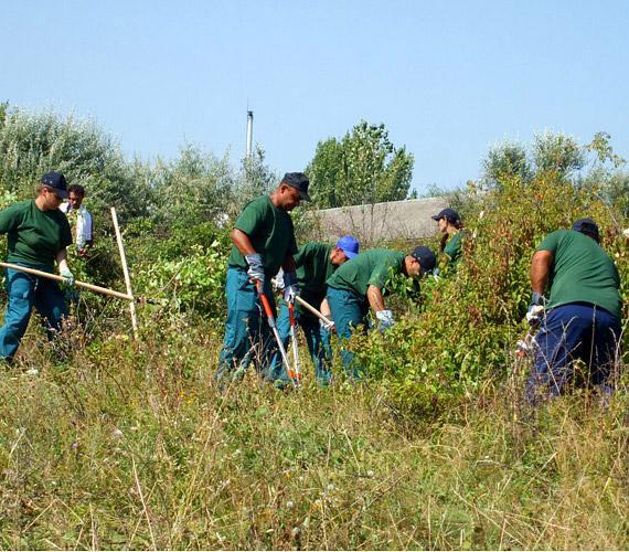 A Belügyminisztérium közfoglalkoztatási mintaprogramjának részeként 60 ember kezdte meg az erdőtelepítési munkálatok előkészítését Gyöngyösorosziban.