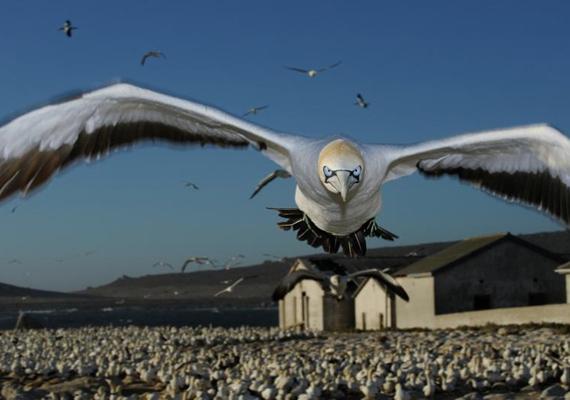A tengeri szula lenyűgöző képével az első helyet szerezte meg Thomas P. Peschak 2011-ben.