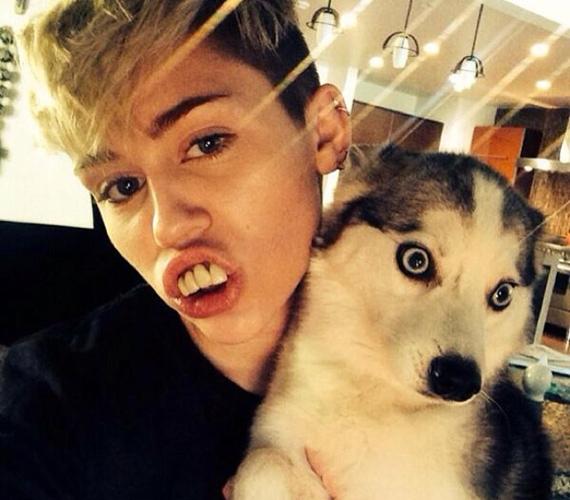 Miley Cyrus szeret magából bolondot csinálni csak azért, hogy észrevegyék, valószínűleg ennek szellemében készült ez a nem túl előnyös szelfi is róla.