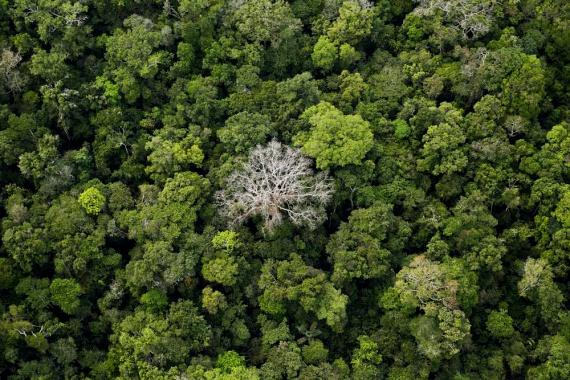 A csodaszép erdő megritkításával az ott élő állatvilágot is veszélybe sodorják.