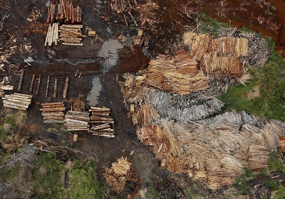 Az erdőirtások jelentős részét az illegális fakitermelés teszi ki, ez jól látszik a légifelvételeken is, amelyek megtisztított, feldarabolt és rakásokba rendezett fákat ábrázolnak.