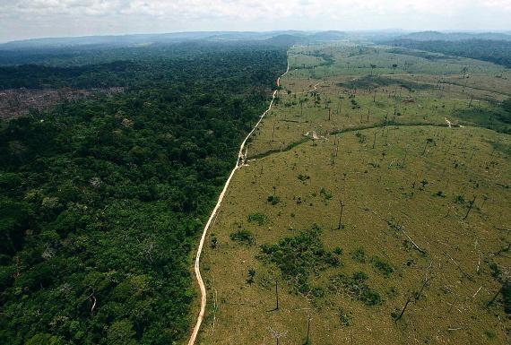 Ezen a helyen éles a határ a teljesen megkopasztott terület és a még meglévő, gyönyörűen zöldellő erdő között. Kétségbeejtő a látvány.