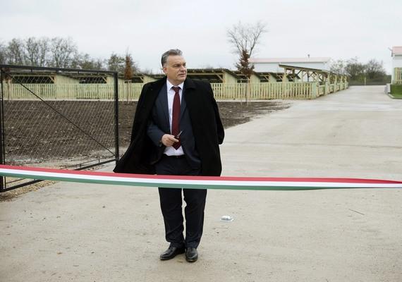 Az Avató című kép a hír- eseményfotó egyedi kategóriájában második helyezett lett. Orbán Viktor Alcsútdobozon avat mangalicatelepet.