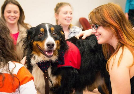 A kutyaszobába egészen fiatal állatok kerülnek, akiket később vakvezető kutyának képeznek majd ki. Így mindenki nyer, a diákok felszabadultabbak lesznek, a kutyusok pedig szokják az emberek közelségét.