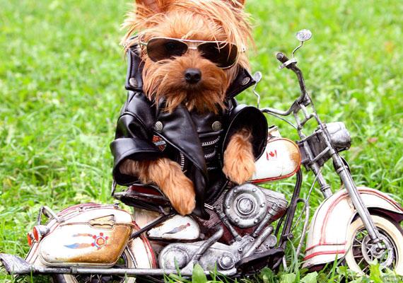 Helló, bébi, elvihetlek egy körre? A motoros vagány képét itt töltheted le.