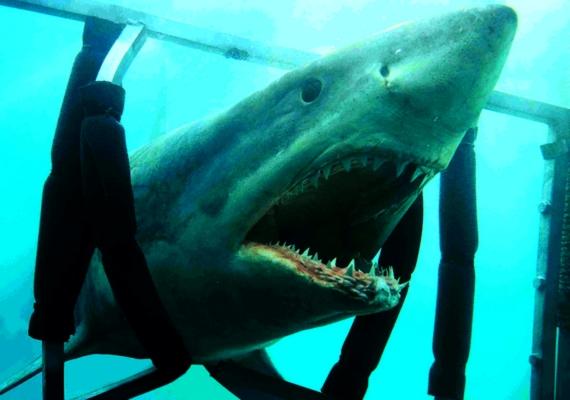 Mindössze 3,9 pontot ért el az IMDb-n a 2011-es Cápák éjszakája. A vérszomjas tengeri állatok sok forgatókönyvírót megihlettek már, és az eredmény általában eléggé gyenge lett - ez most sincsen másképp.