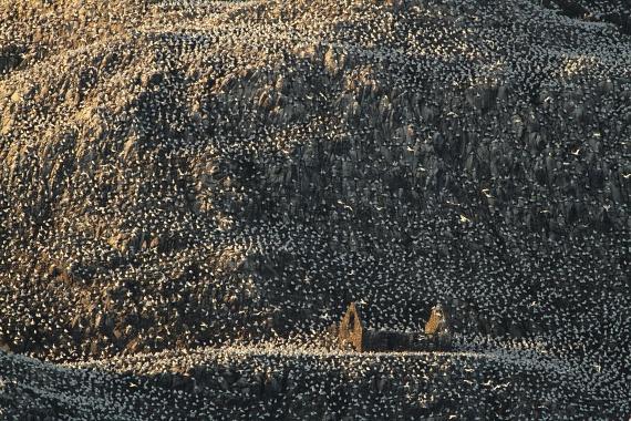Charles Everitt Lakóterület című képe az állati lakhelyek kategóriájában szerezte meg az első helyezést. A fotón szereplő szulakolónia élőhelye a Skócia melletti Bass Rock, amely jelenleg lakatlan sziget. A különös hely számos fikció alapjául szolgált, ami nem véletlen: remetelakok, polgárháborús kastélybörtön és világítótorony is található rajta.