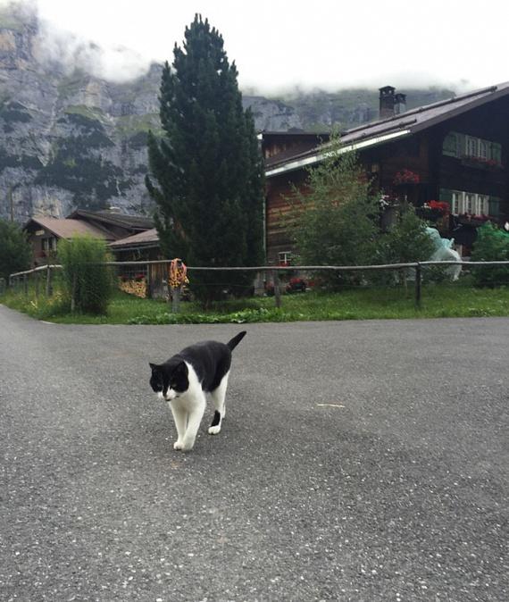 """""""Ez volt az egyetlen macska, amit láttam. Nem véletlenül csatangolt a hegyekben, úgy tűnt, mintha a közeli faluban lakna."""" Végül aztán valóban kiderült, hogy egy gimmelwaldi hotel tulajdonosai a cica gazdái, és az gyakran csatlakozik az arra járókhoz. Sokak szerencséjére."""